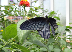 Black Butterfly (Digitalholgi) Tags: test animals zoo tiere zoom sony filter krefeld freehand holger freihand kameratest neutraldichte hx100v