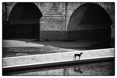 DSC_3076 (iulian nistea) Tags: madrid street bridge dog chien river pod strada rivire pont rue cine ru