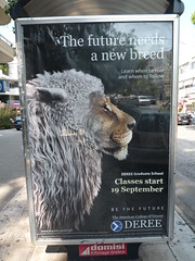 Learn when to roar and whom to follow at the American College of Greece (dullhunk) Tags: college sheep lion follow greece american roar acg deree
