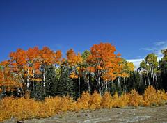 Bowns Point Trail - October 2011 (5) (Bob Palin) Tags: autumn 15fav usa fall colors utah colours aspen club100 100vistas instantfave vogonpoetry nopin orig:file=20111001eos30d14775
