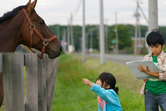 Horse (akiko@flickr) Tags: horse grass kids japanese hokkaido drawing farm pasture