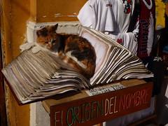 Chat à Valparaiso