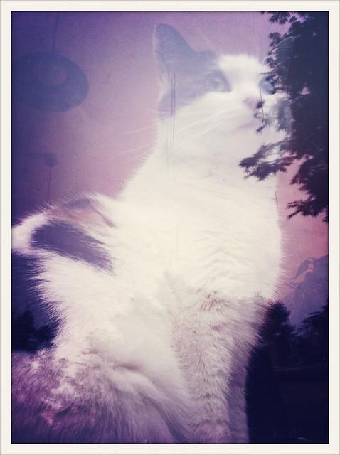 dreamcat