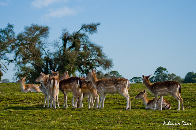 Pampa Safari