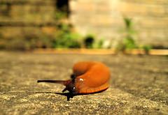 (Mr Richie) Tags: orange macro london night digital garden lowlight critter contax slug lambeth westnorwood beadyeye i4r effratimer naebadforaweecamera