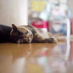 E Meow (Steve only) Tags: cats 120 6x6 film mediumformat mc bronica epson fujifilm v600 80mm f24 zenza pro400h s2a 8024 zenzanon ブロニカ gtx820 e喵
