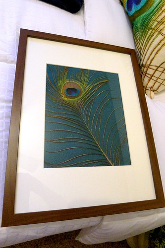 Peacock Feather Framed