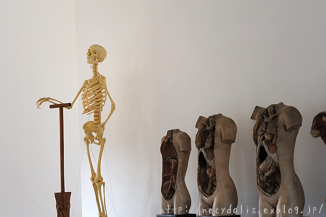 human anatomy...