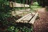 bench in the woods (In Memory Lane~) Tags: summer london 35mm dof bokeh mark richmond ii 5d 35l