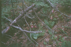 (imoved) Tags: trees plants green film leaves analog forest 35mm moss rocks floor analogue olympusxa2 expired longlakeprovincialpark