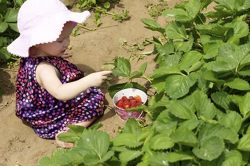 Learning to pick strawberries