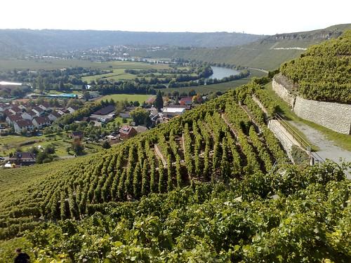 Mundelsheim: Neckarschleife by globetrotter_rodrigo, on Flickr