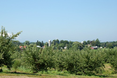 View from the raspberry bushes by Eve Fox, Garden of Eating blog, copyright 2011