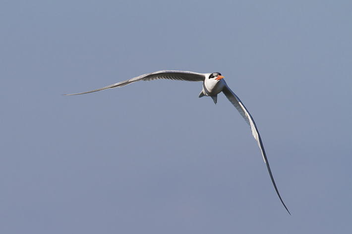 071411_bird04