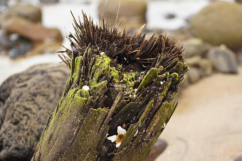 Ancient Tree Stump