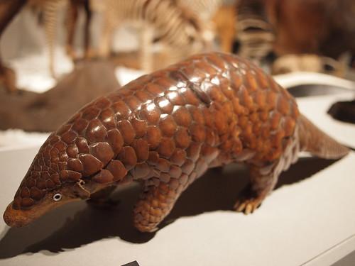 大哺乳類展 アルマジロの剥製