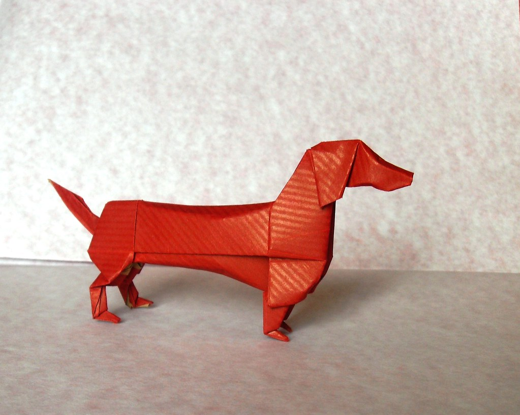 the worlds newest photos of dachshund and origami