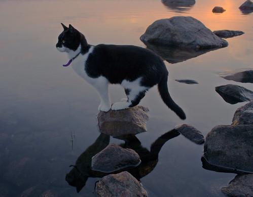 katt, solnedgång