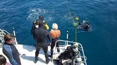 RDT Ace I Mission Diver queuing