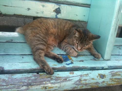 近所のネコちゃん。