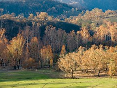 "No its not Autumn, but bushfire damaged trees • <a style=""font-size:0.8em;"" href=""http://www.flickr.com/photos/44919156@N00/5965990187/"" target=""_blank"">View on Flickr</a>"