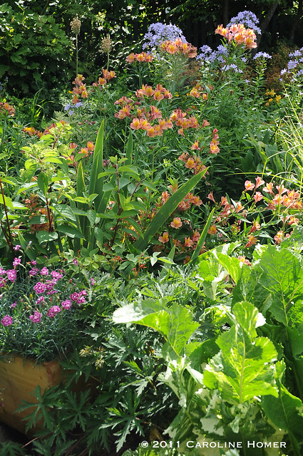 A colorful garden bed