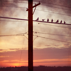 Seven Birds (pixelmama) Tags: texture birds clouds sunrise wires fermilab telephonepoles leonardcohen  hcs tweettweet birdsonawire birdonthewire mypassion bataviaillinois sevenbirds clichsaturday