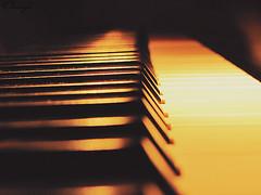 !*      (*Omniya) Tags: canon sadness piano symphony