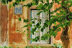 the tree in Sintra (S. Lo) Tags: travel tree portugal window wall sintra leuropepittoresque