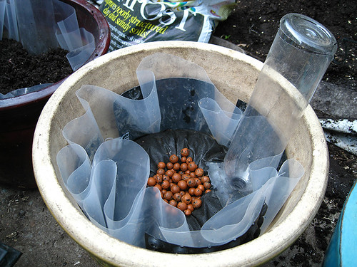SIP- Clay pot planter