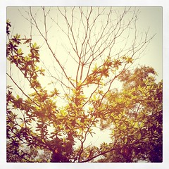 (chinnian) Tags: trees leaves square toaster branches squareformat iphoneography instagramapp uploaded:by=instagram foursquare:venue=4cf2380c899c6ea8a843f5c1