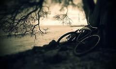 Cell phone photography- Bike on the beach (Tommy Ellis) Tags: ocean vacation tree art beach water grass bike dark hawaii blurry waves phone branches cellphone monotone maui tires dirt lahaina tommyellis htcevo