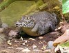 If You See A Crocodile Don't Forget To Scream !! (Church Mouse 07) Tags: summer reptile july crocodile blackpoolzoo churchmouse07