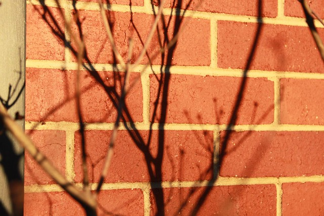Lilac shadows on red brick