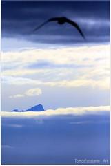 QUE NO HALLA CIMAS.... (Tomasescalante) Tags: sky color art alaska ave cielo nubes cima