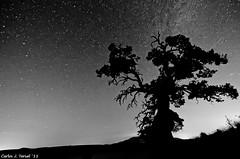 Silueta bn (Carlos J. Teruel) Tags: nikon murcia cielo estrellas nocturnas caravaca 2011 vialactea tokina1116 xaviersam losroyos carlosjteruel