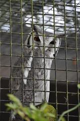 New Forest Wildlife Park - Evil Owl