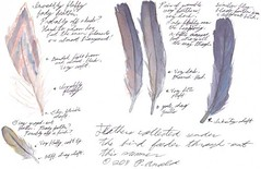 7.21.11 - Feather studies