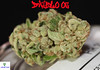 Diablo OG Nug2 (Humboldt Relief) Tags: losangeles weed 420 og pot marijuana herb cannabis ganja medicalmarijuana medicalcannabis cannabisindica diabloog humboldtrelief