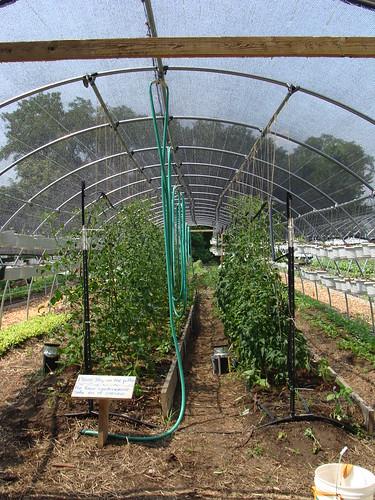 Growing Hoophouse