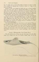 Anglų lietuvių žodynas. Žodis rhinoptera bonasus reiškia <li>rhinoptera bonasus</li> lietuviškai.