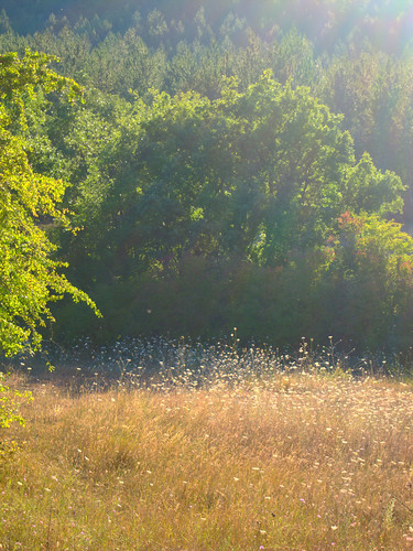 flower field by Danalynn C