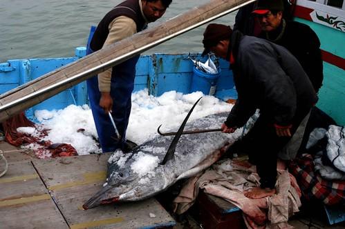 三位老漁夫曬得黝黑的臉上寫滿了疲憊,卻充滿了笑容;攝影:林雅容