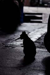 004_MG_4119_(021) (gym.king) Tags: pet cats pets animal cat kitten kittens planet     straykittens     kissablekat bestofcats  kittyschoice  catmoments  catswelove friendsofzeusphoebe