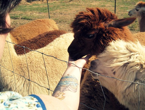 feeding the Llamas by punkscrapper