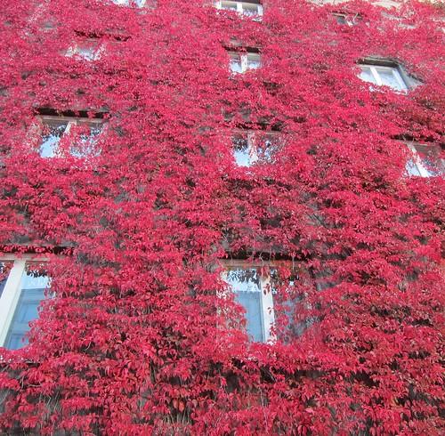 Valon korttelin väriloistoa syksyllä by Anna Amnell