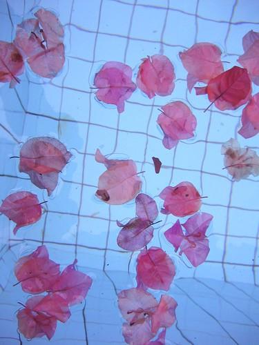 Kukan terälehtiä uima-altaassa by Anna Amnell