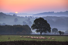 Nidderdale Morning (rgarrigus) Tags: morning england dog mist misty fog sunrise landscape haze europe sheep yorkshire foggy layers hazy nidderdale sfumato sheepherding dacre greatphotographers shepherding robertgarrigus robertgarrigusphotography
