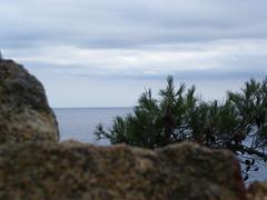 Mediterranean sea (mahatsorri) Tags: sea costa verde azul de la mar agua mediterranean mediterraneo mare selva girona catalunya pino brava catalua gerona tossa nostrum