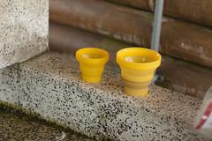 Foldable silicon cups in Hamamatsu Camping Ground, Hamamatsu, Hokkaido, Japan